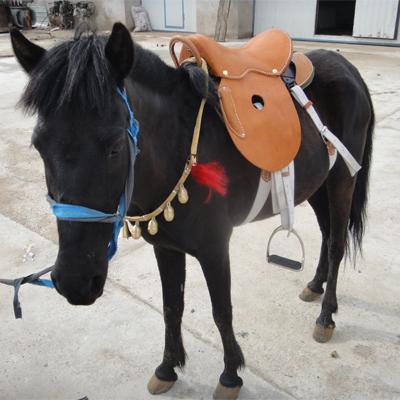 矮马出售_鄂州鄂城德保矮马养殖在线咨询