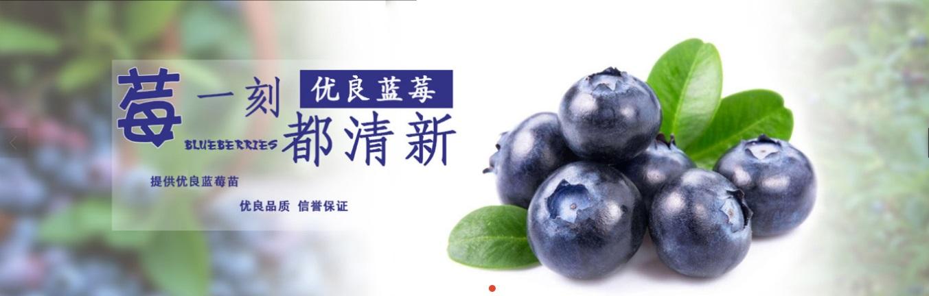 玉林智力杜克蓝莓苗种植方法