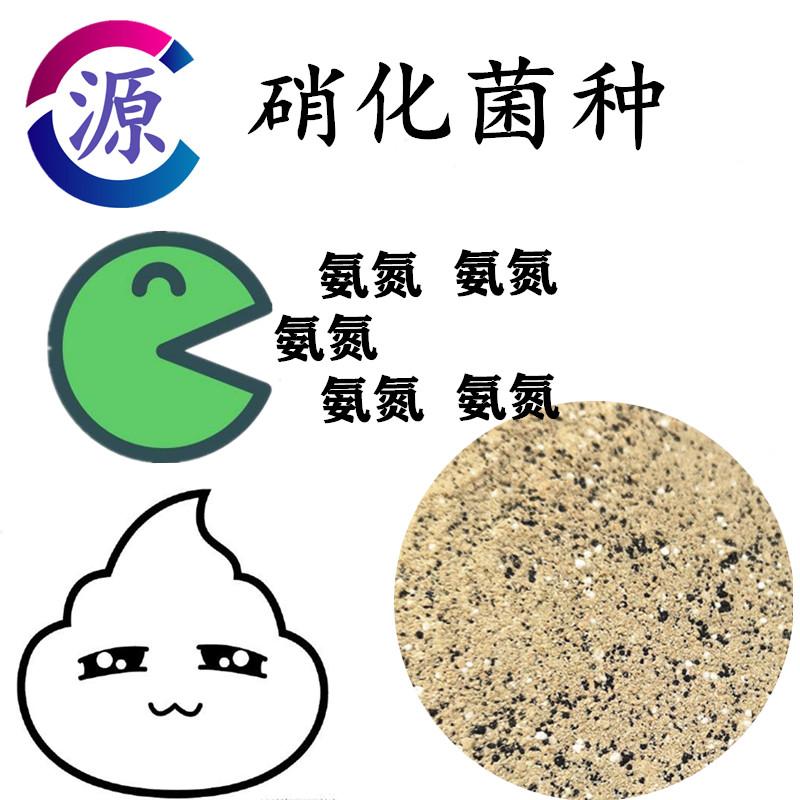 浑江污水处理耐低温菌种-源头厂家