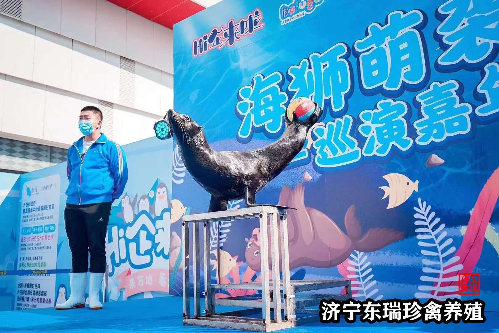 长沙市商场活动开业海狮表演如何策划?