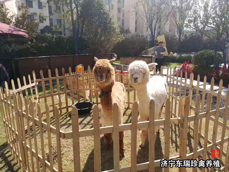 内蒙古自治区萌宠动物出租多少钱一天