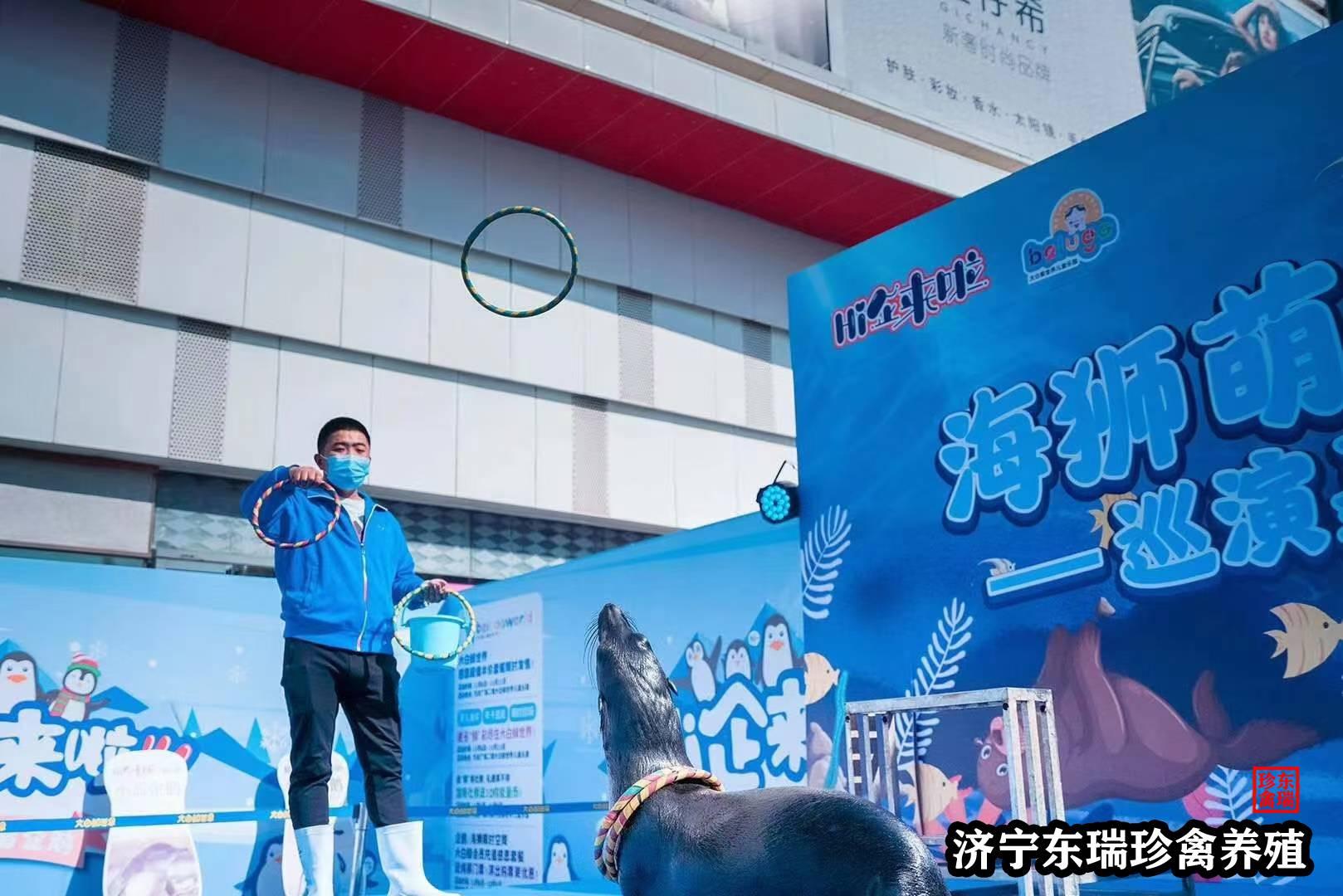 湖南省邵阳市萌宠表演多少钱一天