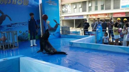 哪里有动物出租天津欢迎来访