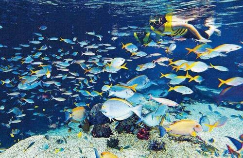 东莞万江海洋展出租海洋生物展策划暖场供应推荐欢迎您2021