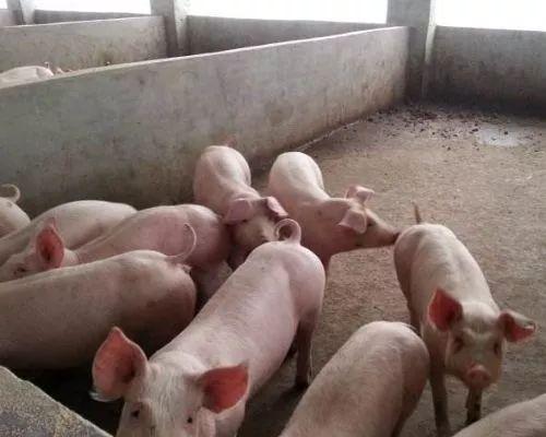 河池金城江乡镇养猪场污水处理厂家