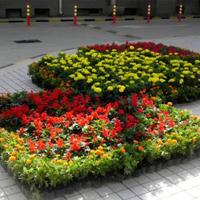 潍坊考盆景工证考试内容考试时间报名地点培训考试