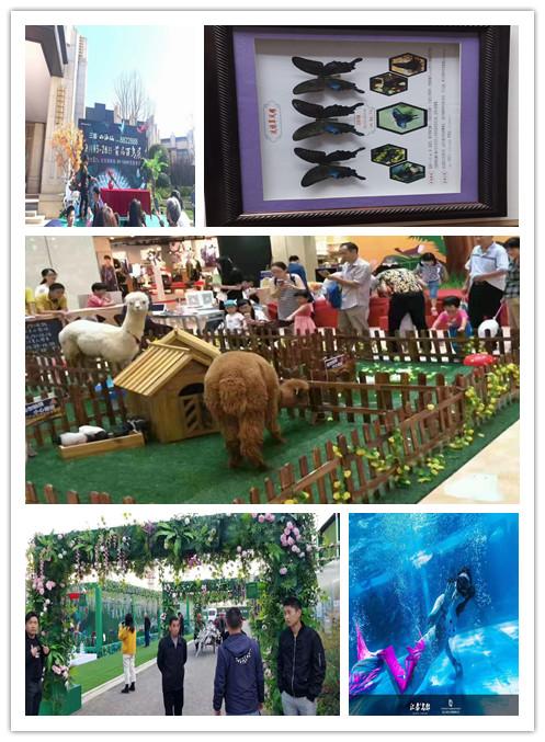 漯河市海狮表演出租三天多少钱