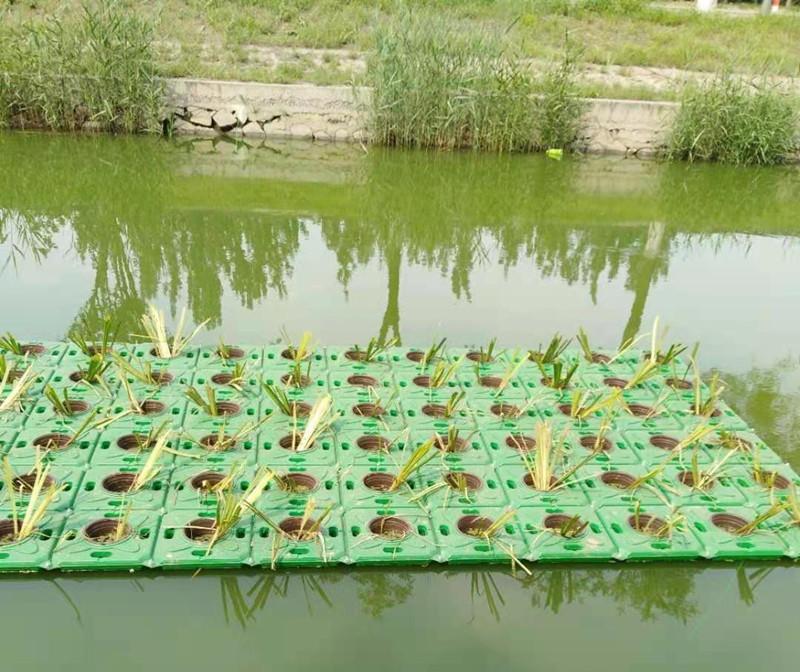 花山水生种植浮盆【的作用】