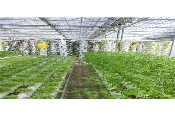 保定大棚蔬菜控制系统--奥越信科技