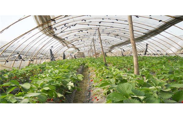 宜宾物联网农业技术--奥越信科技