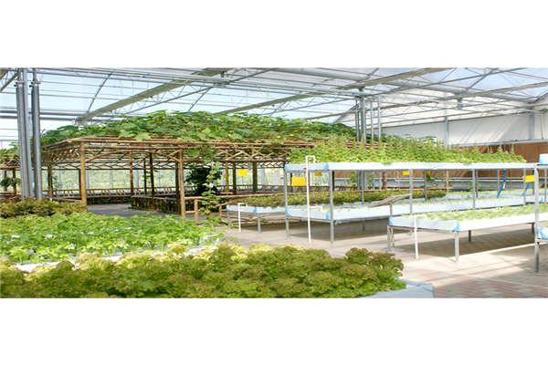 白山农业大棚智能监控系统--奥越信科技