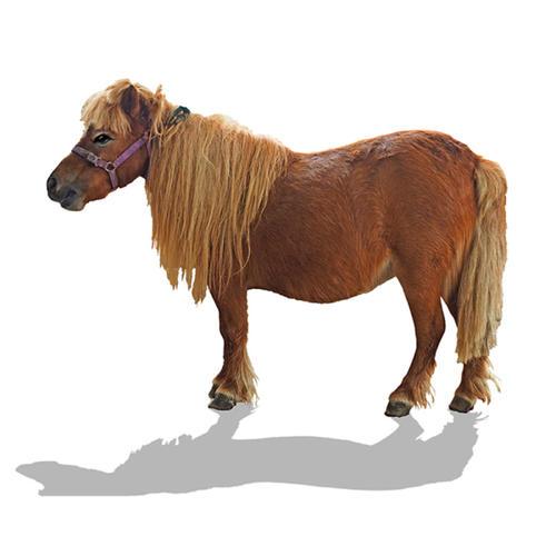 贛州矮馬養殖方法
