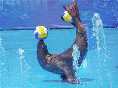 海洋展海狮表演周边租赁 周边海狮表演出租-济宁