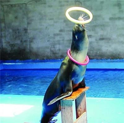 本溪市明山区海洋展搭配海狮表演租赁