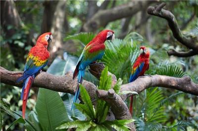 广州小动物表演出租哪里有 百鸟展出租鹦鹉表演出租