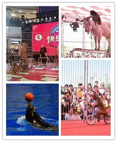 临沂周边海狮表演出租 萌宠展哪里有出租的