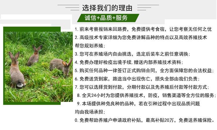 昆明东川合作加盟肉兔年收益可观