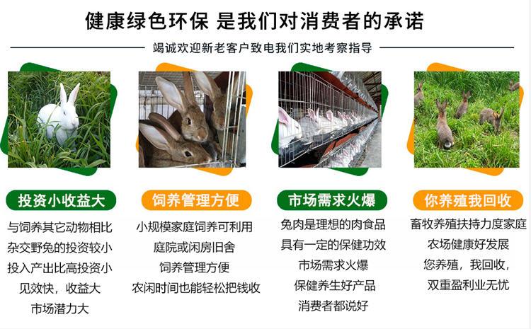 怒江州泸水兔场联系方式养成包回收