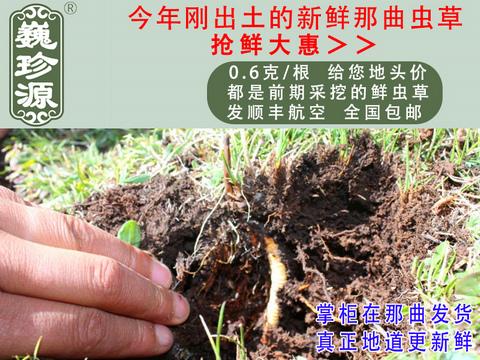福建省福州市珍峰冬虫夏多少钱