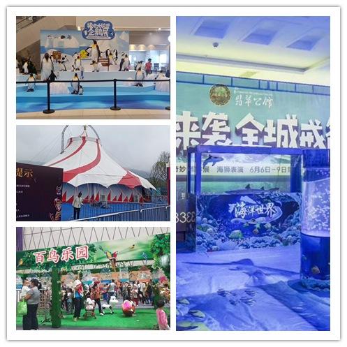 辽阳县海狮表演租赁欢迎来访