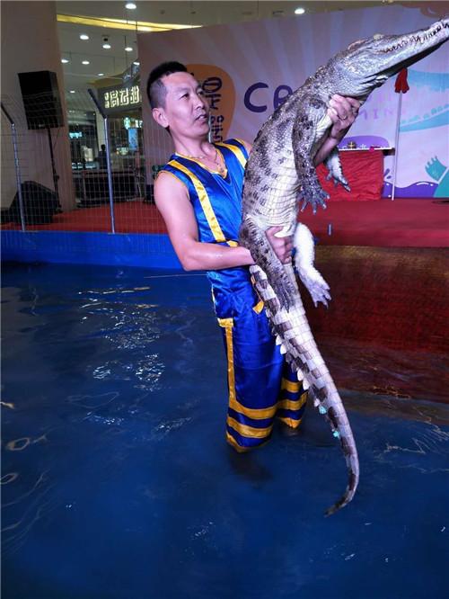 洋山海陆空动物展览出租鳄鱼表演租赁