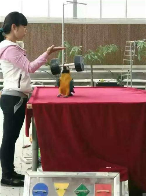 醴陵热带鱼展览租赁怎么收费