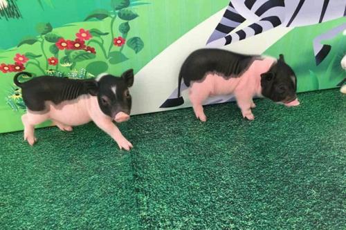 义县企鹅宝宝展览租赁租赁方式