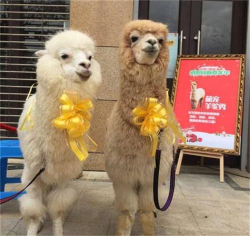 林甸县小萌宠动物展览租赁鳄鱼表演租赁