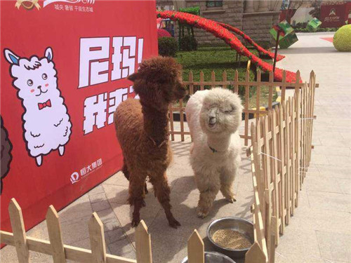 天元区鳄鱼表演租赁多少钱一天