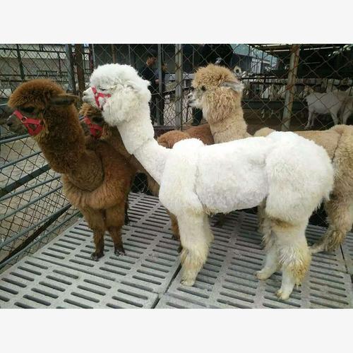 滨州市沾化区珍奇动物哪里有卖的