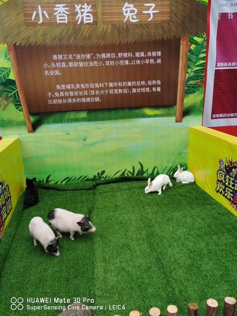 河南郑州哪里有出租小矮马的|海洋生物会展出租——一天多少钱
