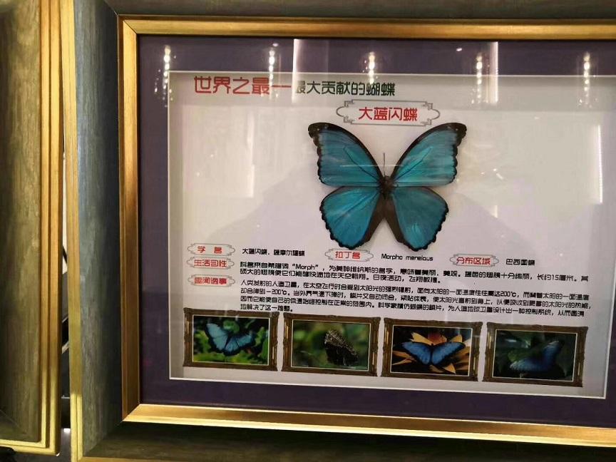 亳州出租羊驼(骆驼出租价格多少)「动物展览」