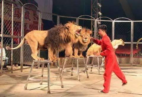 茂南海狮表演租赁价格欢迎您