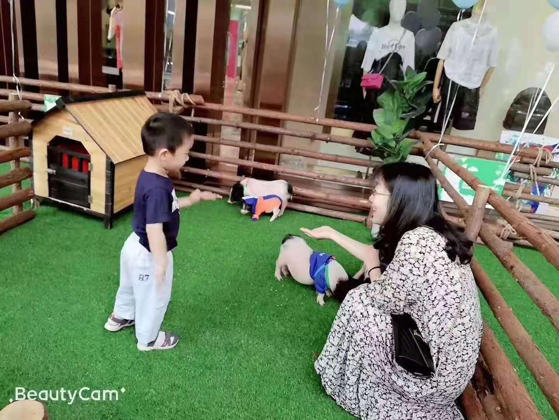 衢州萌宠百鸟珍禽展览出租小萌宠动物展览租赁