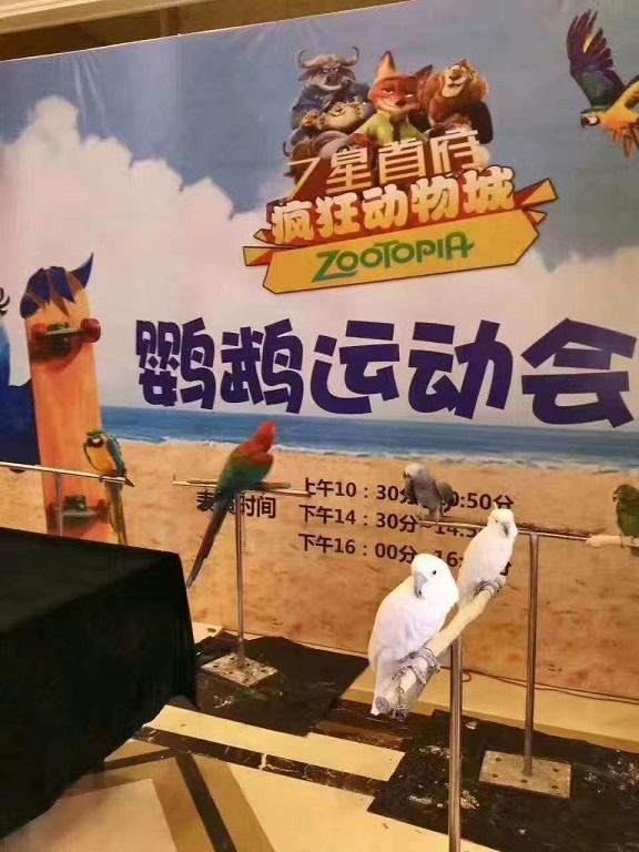江西抚州狮子表演租赁公司「大型租赁公司」
