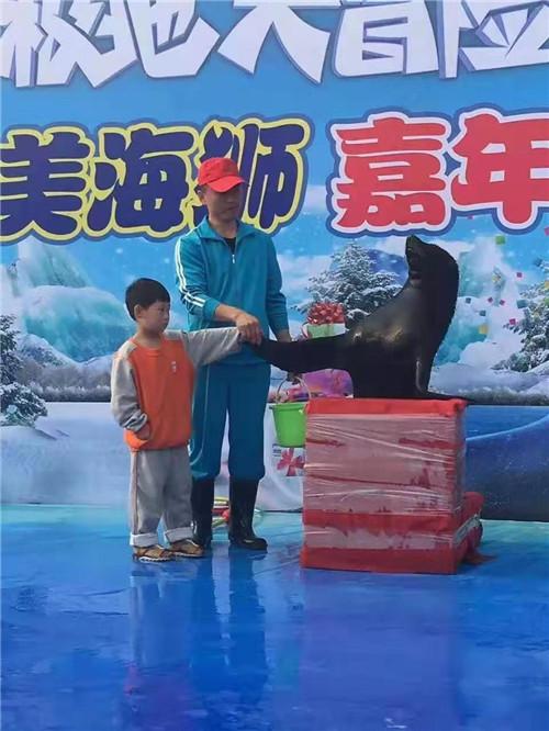高青县鹦鹉表演百鸟展租赁一周的价格