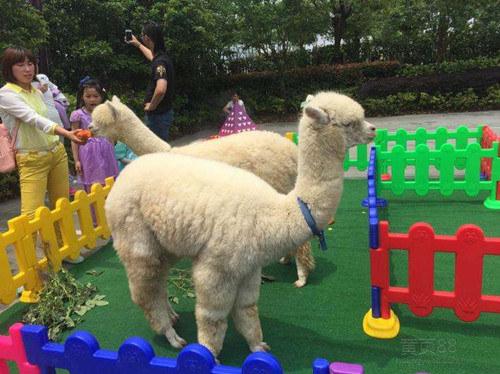 盐池县海洋生物展出租动物表演出租