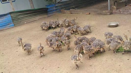 柳州市城中区单峰骆驼联系方式