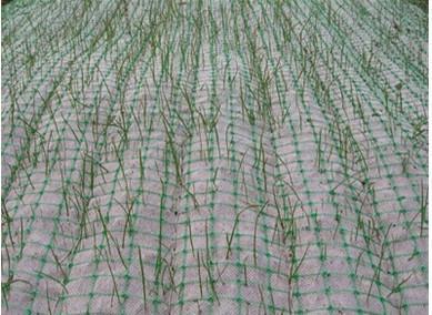 商洛植生毯加筋防冲毯草坪毯