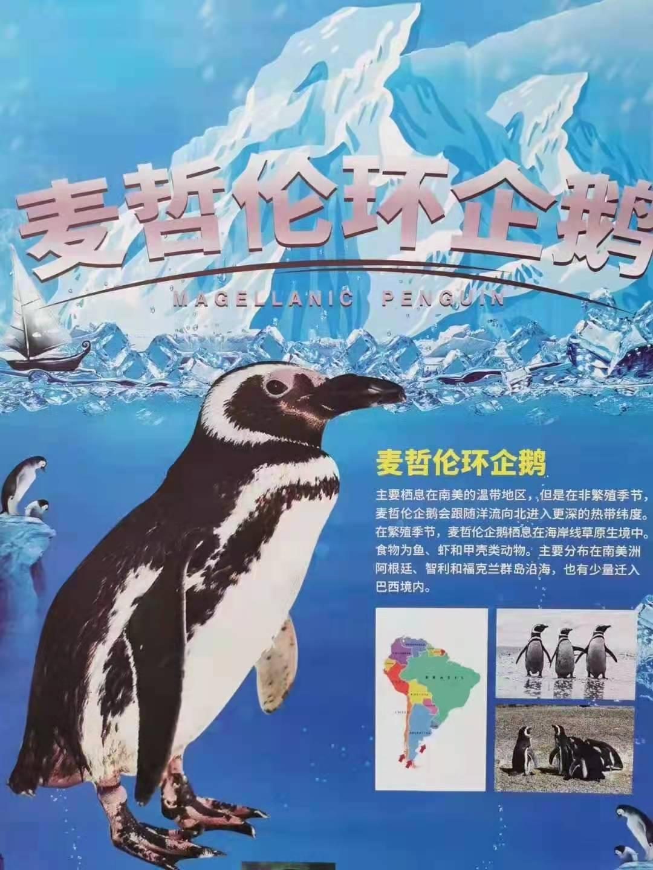 (动物租赁):松原海洋动物展出租(一天多少钱)-【弘卓动物租赁】