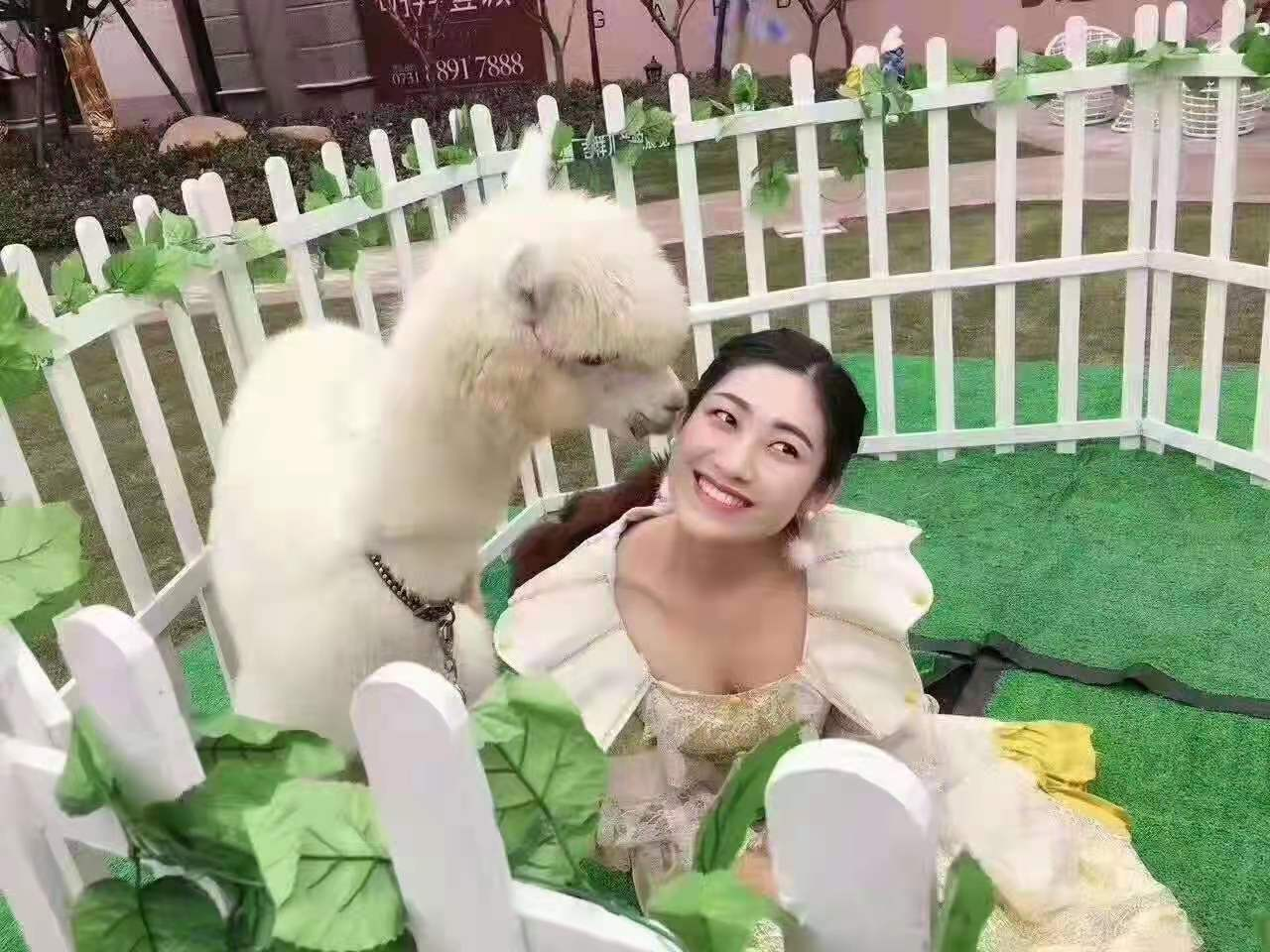 天水萌宠动物出租,孔雀展览租赁【弘卓动物租赁】