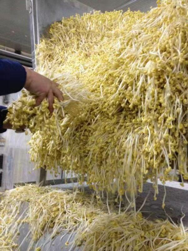 安龙大型豆制品机械供应商