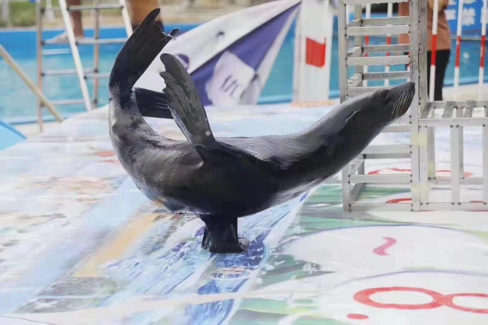 动物展览出租-随州大型马戏团表演租赁公司