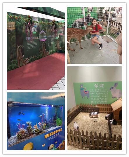 在哪里可以租海狮表演 迪庆动物萌宠展租赁