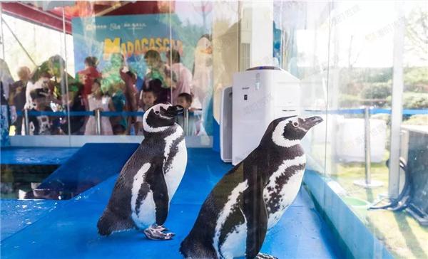 瑞安市小萌宠动物展览租赁海狮表演公司