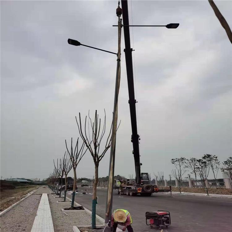广元市利州区电子警察抓拍八棱锥形八角边立杆6*8米交通监控杆自有工厂制作