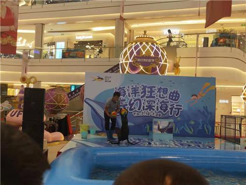 苍溪矮脚马展览租赁美人鱼水中舞蹈表演