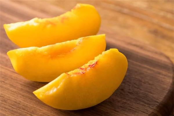 荷兰香蜜杏树苗两年苗价格-荷兰香蜜杏树苗简介及价格