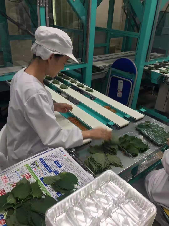 出国签证农场、工厂高薪急招出国打工出国劳务正规派遣公司