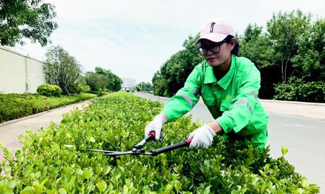 上海市新手如何考育苗工证培训几点来这里你就明白